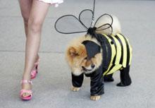 Мода для собак 8