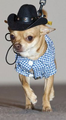 Мода для собак 6