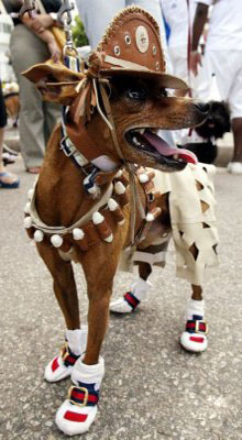 Мода для собак 7