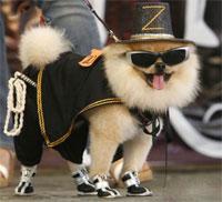 Мода для собак 2