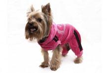 Мода для собак 5