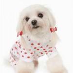 Мода для собак