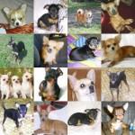 Породы маленьких собак фото