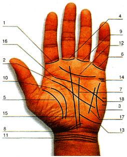 Линии руки в хиромантии