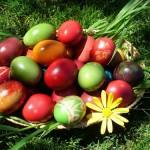 Окрашивание пасхальных яиц красящим отваром