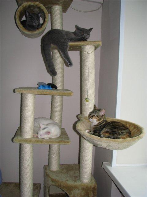 Домики для кошек - фото 14