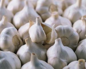 Лечебные свойства чеснока