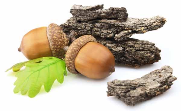 Полезные свойства коры дуба