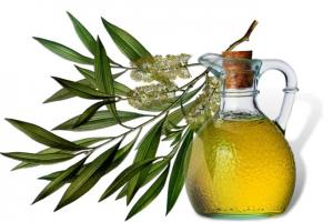 Масло чайного дерева: полезные свойства