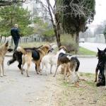 Как защититься от нападения собак.