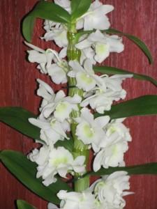 Уход - орхидеи.