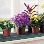 Какие вазоны должны быть в доме