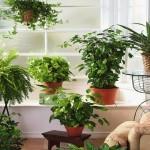 Какие вазоны нельзя держать дома