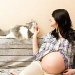 Влияние животных на беременность