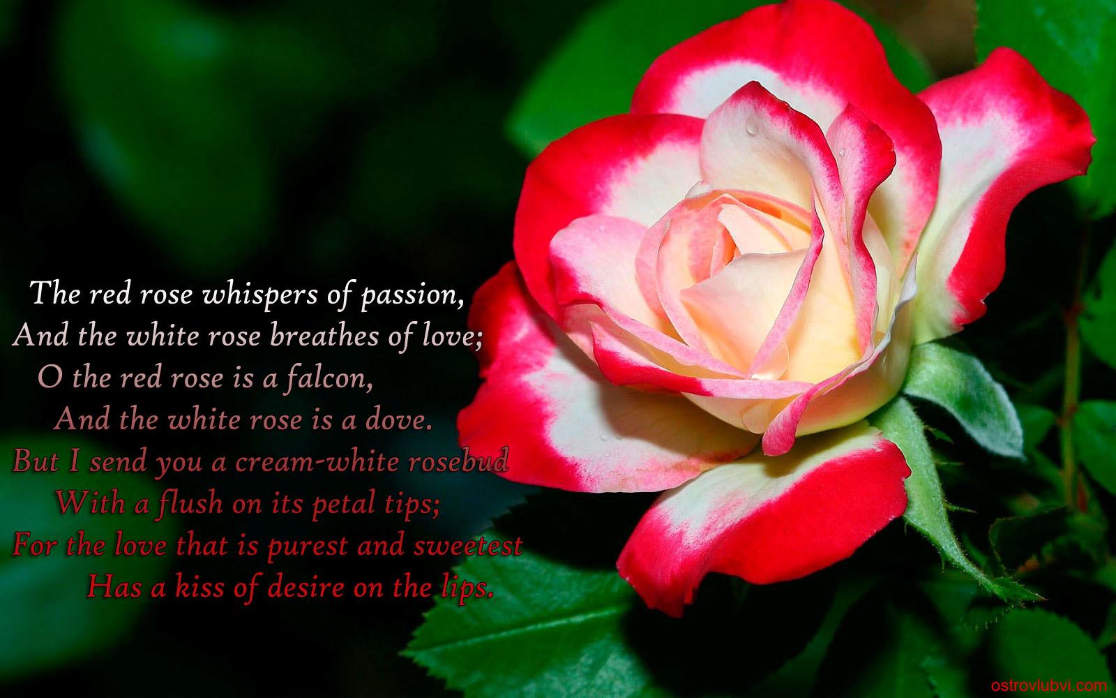Стихи про любовь на английском в картинках
